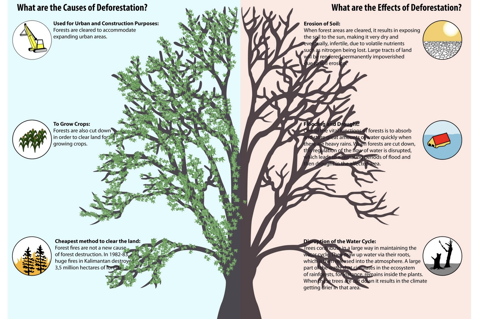 the effects of deforestation on our Check out our project guide net temperature effect of deforestation andrew how does deforestation affect the weather.